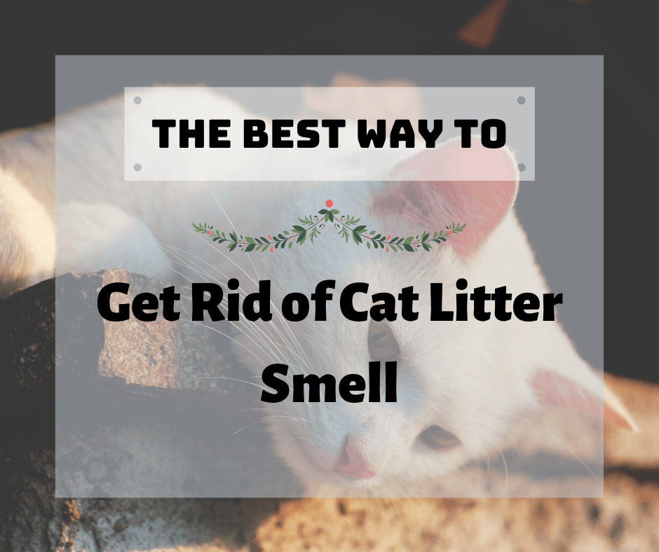 The Best Way to Get Rid of Cat Litter Smell.