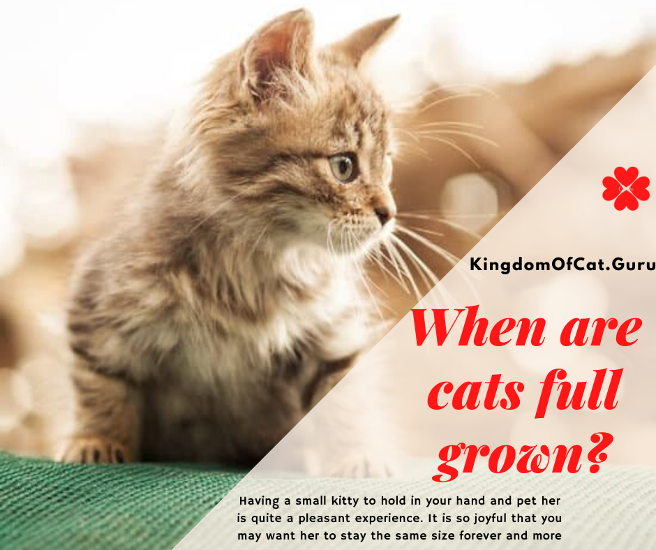 When Are Cats Full Grown?