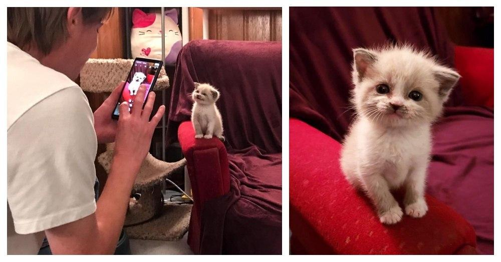 Foster Kitten Melts The Hearts Of People Around The World By Posing For The Camera.