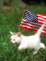 Cats Celebrate Veterans Day, Honoring Those Who Served (Gallery)