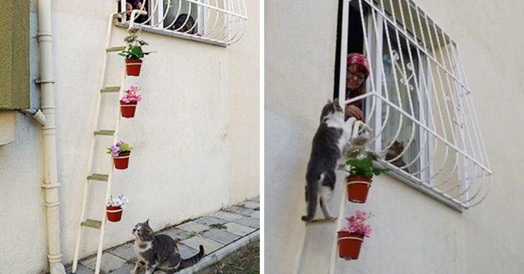 This Woman Built A 'Cat Ladder' To Her Home To Save Stray Cats From Freezing Weather.