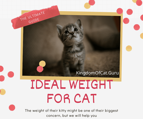 Ideal Weight For Cat