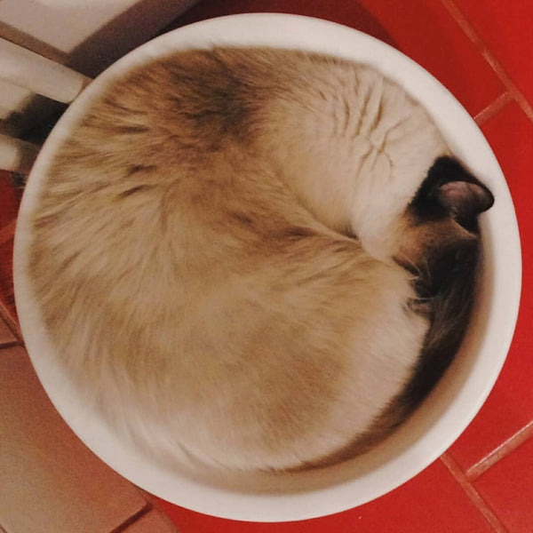 15 Pictures Prove That Cats Are Liquids