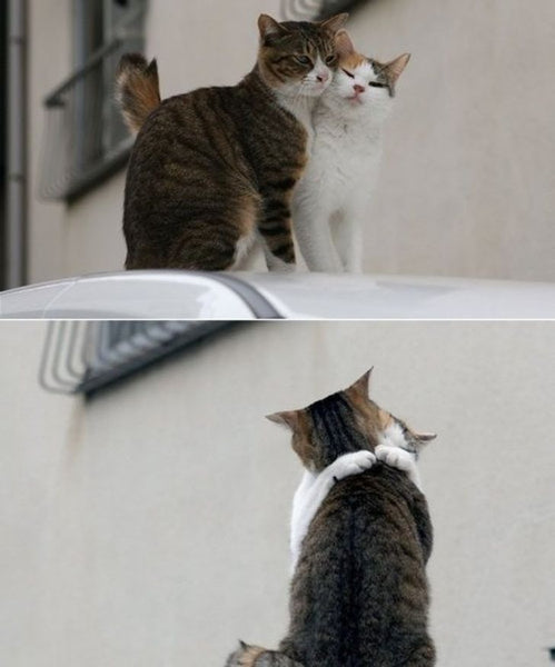 14 Adorable Cat Couples That Will Prove True Love Does Exist