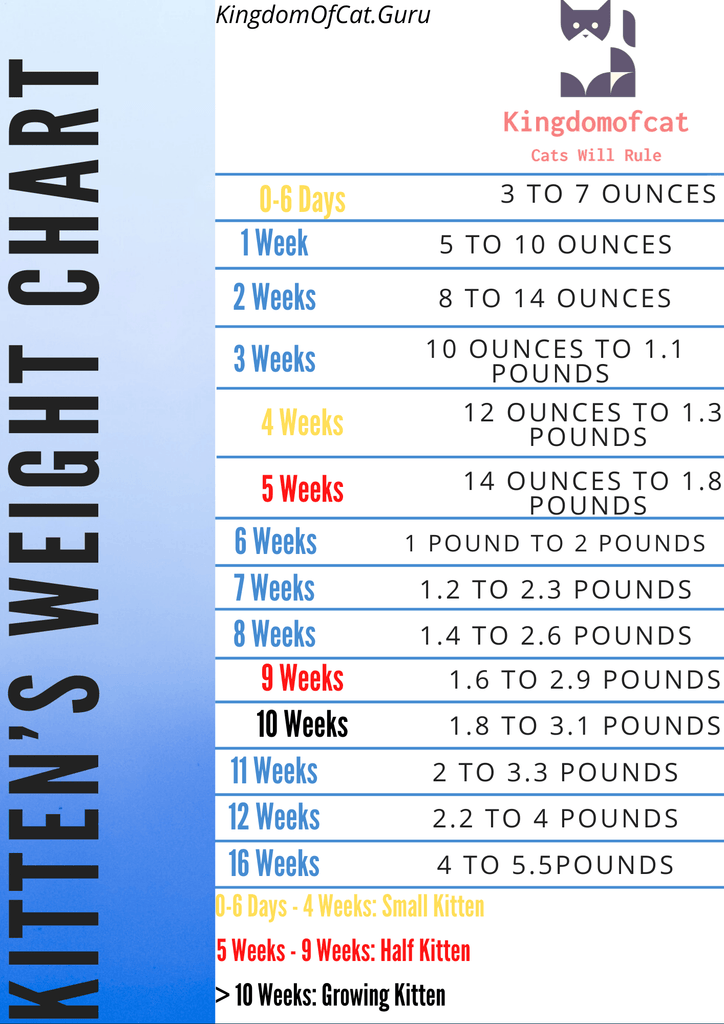Ideal Weight For Cat: Kitten's weight Chart