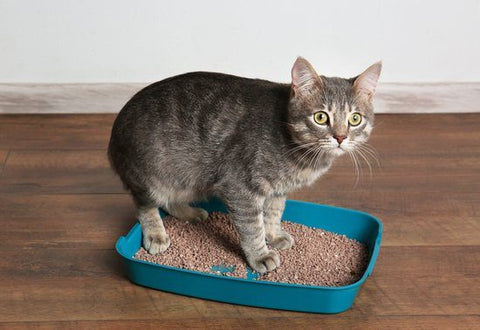 Why Does Cats Poop Outside The Litter Box? Litter box is too small