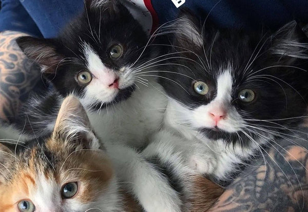 Twin Kittens Stay Together Wherever They Go After They Were Found on Farm