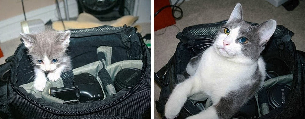 20 Cats That Haven't Realized They've Grown Up