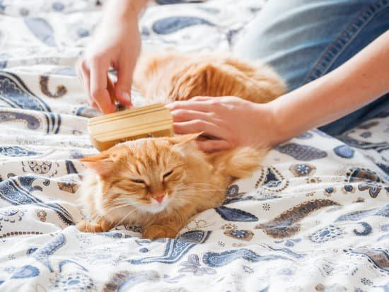 grooming an orange cat