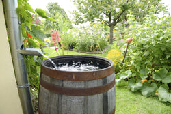 5 Uses for Rain Water - No Butts About It