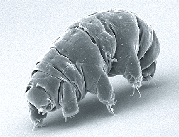 Tardigrades Can Survive Practically Anything, and So Can You - Be Prepared - Emergency Essentials