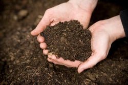 Baby Steps: Soil and Sun