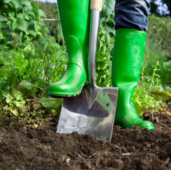 Baby Steps: Preparing the Soil for your Garden