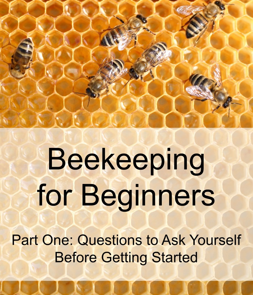 Beekeeping for Beginners_Part One