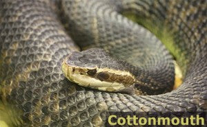 How to Identify Poisonous Snakes