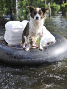 Preparing Pets - Flood