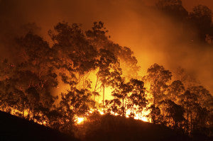 Forest Fire Mississippi Post