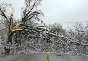 Oklahoma Ice Storm Tree - via NOAA