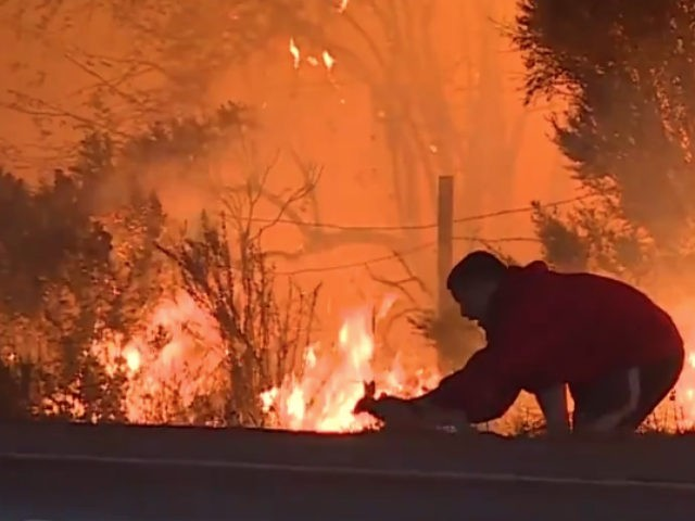 Man Saves Rabbit - via Breitbart Protecting Pets from Wildfire