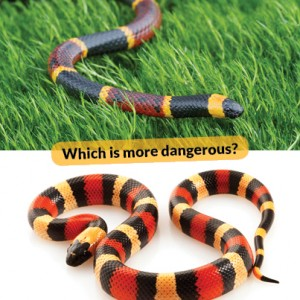 Which is venomous and which is harmless?
