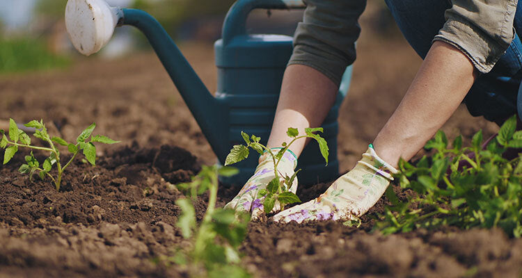 person planting seeds in the garden