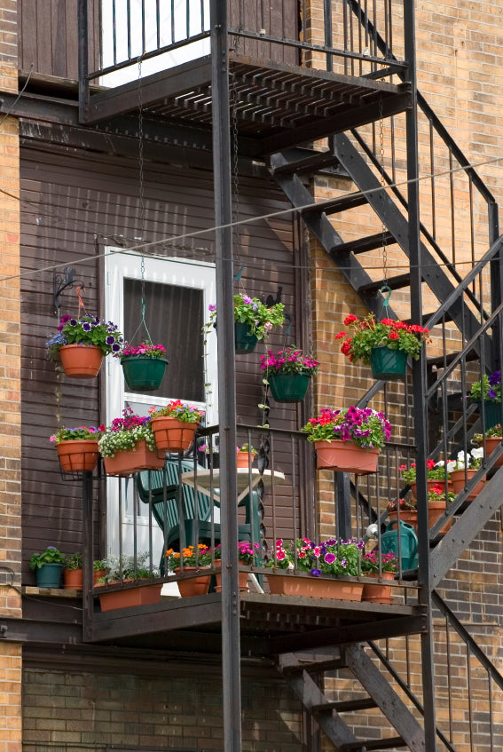 How to Grow Herbs and Veggies on your Fire Escape