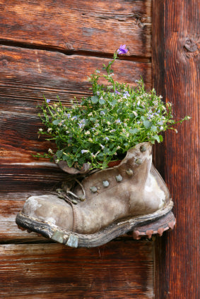 Flowers in an old boot