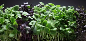Microgreens: What they are and how to use them