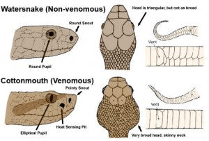 8b45059008f8 How to Identify Venomous Snakes in the Wild or at Home