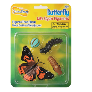 Life Cycle Stages - Butterfly