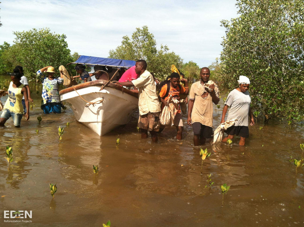 Boat Planting Trees Eden Reforestation Projects
