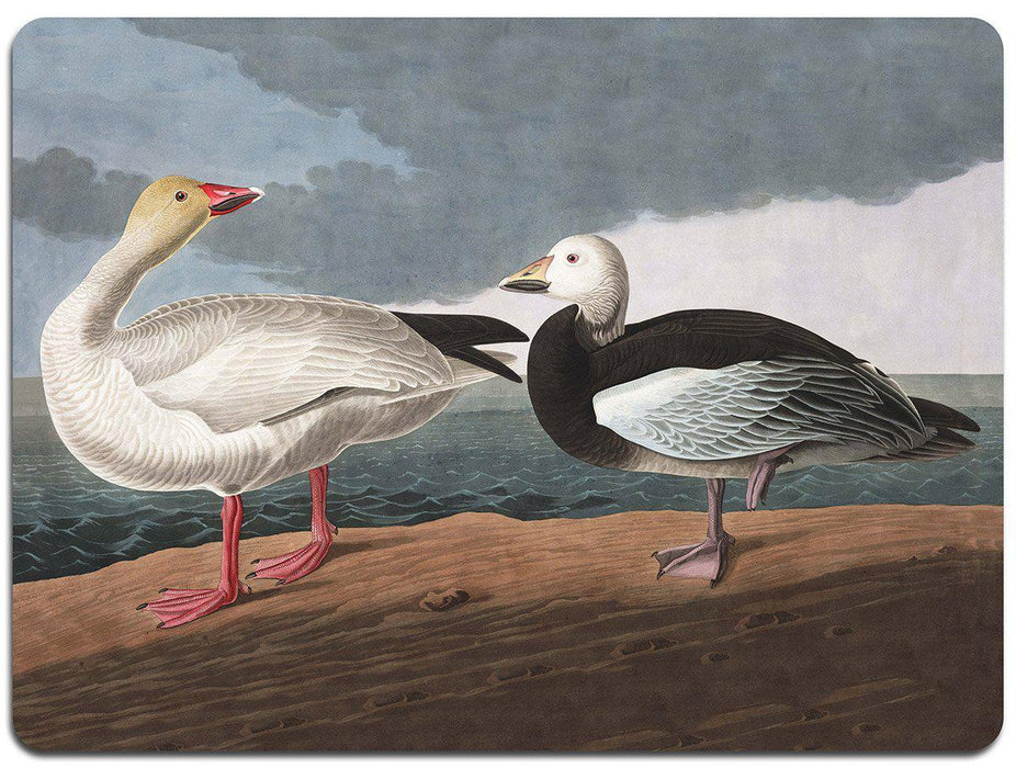 Audubon Birds Table Mats - Set 2 - club matters