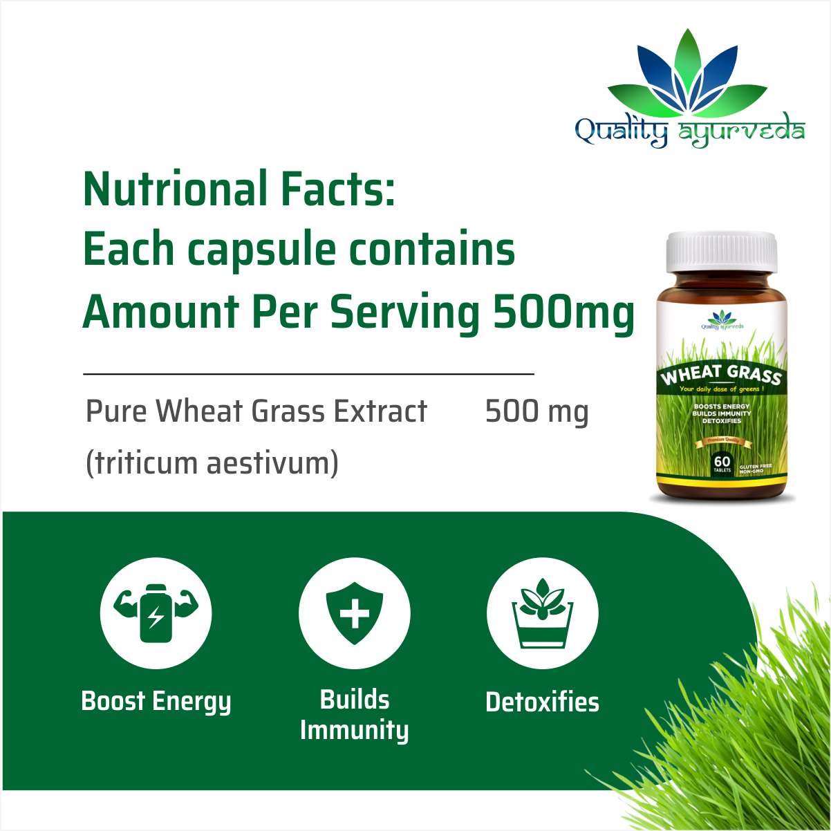 Wheat Grass – Your daily dose of greens