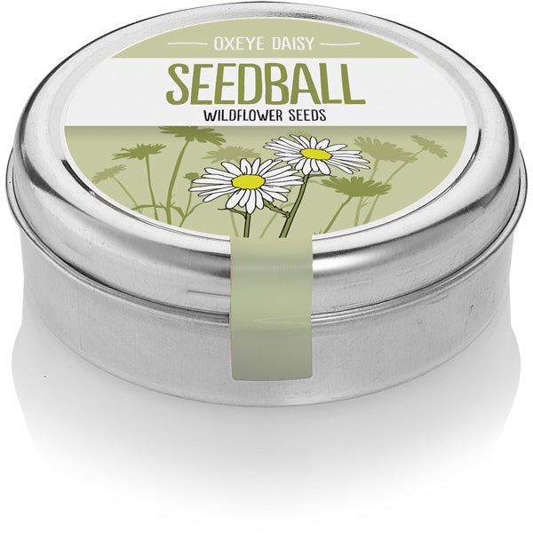 Seedball Tin - Oxeye Daisy