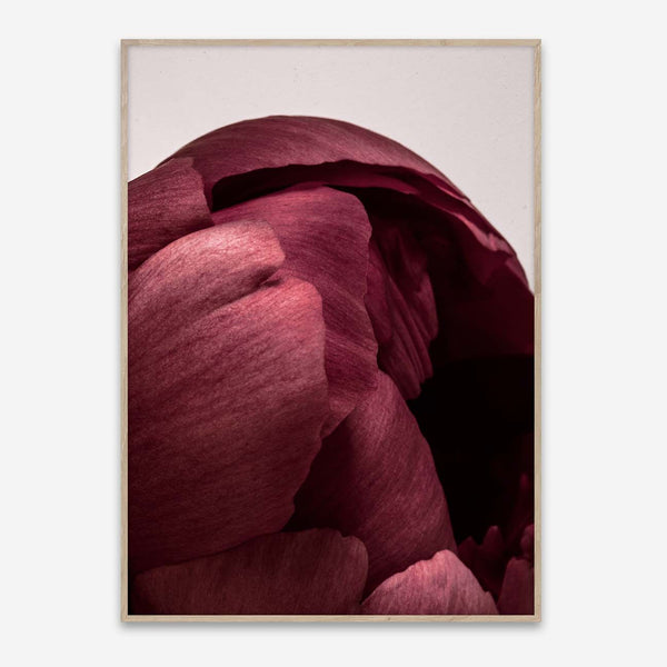 Paper Collective | Peonia 01