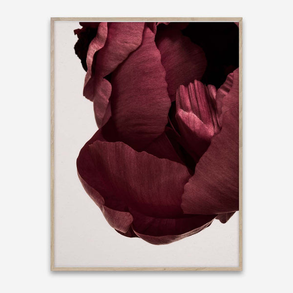 Paper Collective | Peonia 02