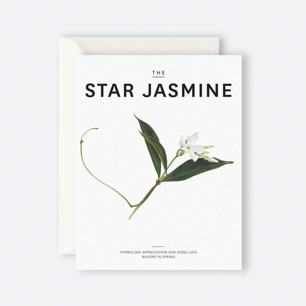 Father Rabbit Stationery | Card | THE STAR JASMINE
