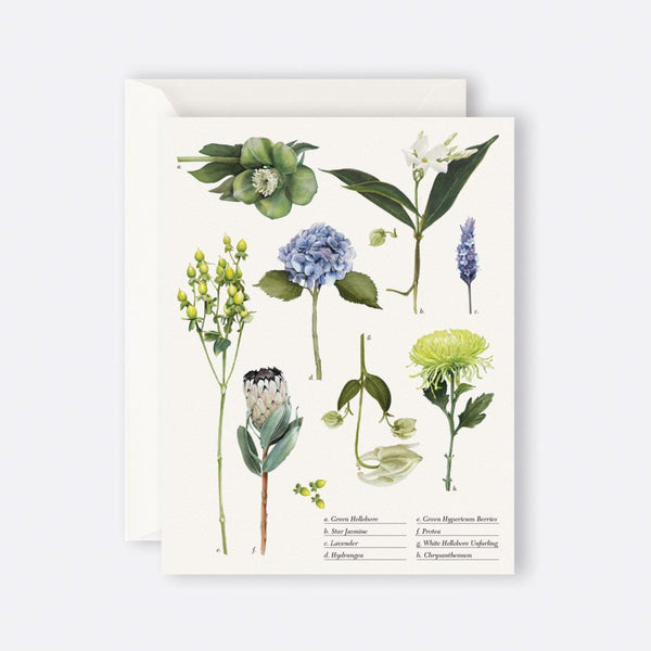 Father Rabbit Stationery | Card | BOTANICAL COLLECTION