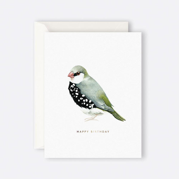 Father Rabbit Stationery | HAPPY BIRTHDAY BIRD