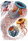"""Discomedusae Jellyfish"" by Ernst Haeckel Print - Falstaff Trading / Nerd culture, Horror, B-movies, cult classic - uniquely cool / falstafftrading.com"