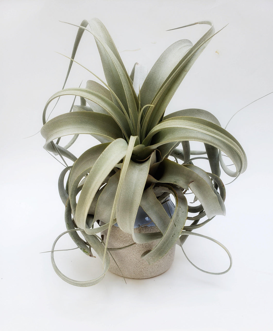 Stone and Ceramic Tillandsia Stand / Blue Air Plant Holder / Plant Pot - Houseplant Collection
