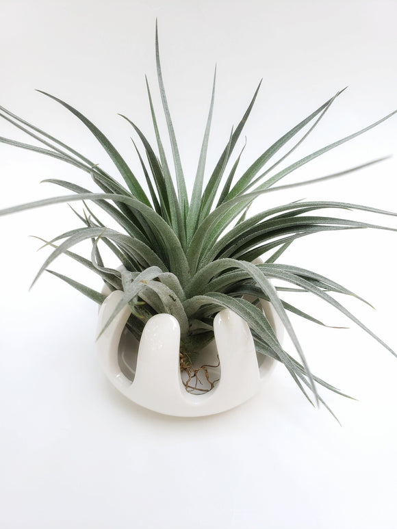 Plant Stand / Air Plant Holder / Tillandsia Stand / Ceramic Pot - Houseplant Collection
