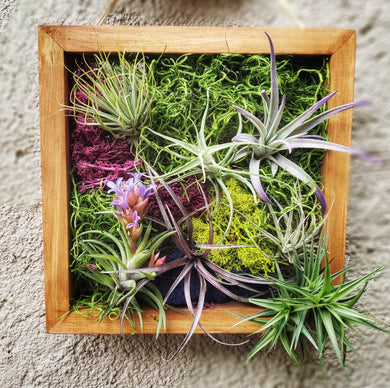 Sympathy Gift for Grief & Mourning / Living Plant Arrangement / Air Plant Frame - Houseplant Collection