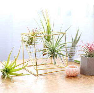 Desk Air Plant Holder / Plant Stand / Tillandsia Stand / Ceramic Pot - Houseplant Collection