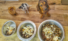 dog food and raw diet, is it nutritious.