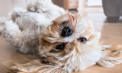 Managing Your Pet's Anxiety This Halloween