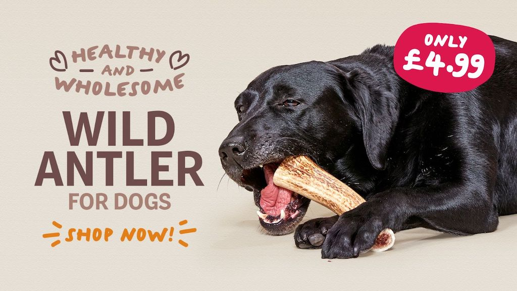 Health & Wholesome Wild Antler For Dogs