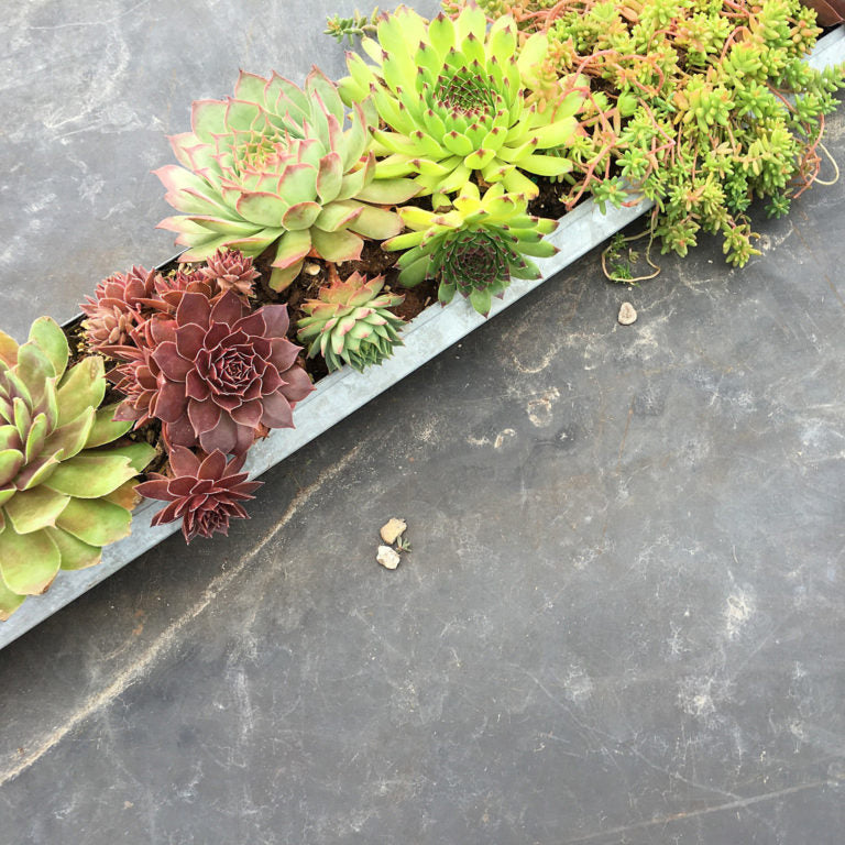 Succulents - Download