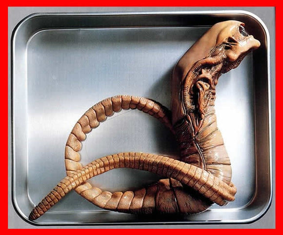 Alien Chestburster Life Size 1/1 vinyl model kit figures - indymodel88