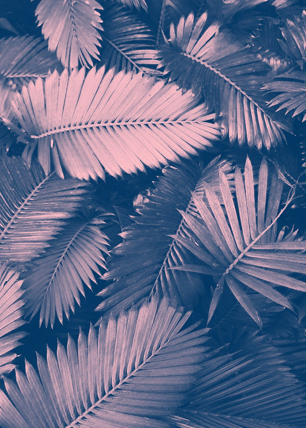 Foliage Pink and Blue Print